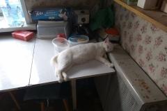 Belobrysska is sleeping near hot radiator
