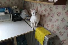 Belobrysska in the kitchen