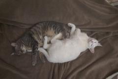 Belobrysska and Pusha, a rare moment of peace