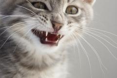 I'm gonna sneeze!
