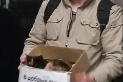 Chernushka cat in the subway