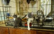 Big kittens and Greyish