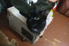 Galaxy cat, December 2018