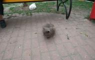 Glaphira cat at the street
