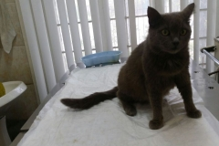 Glaphira cat at the vet clinic