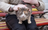 Moos'ka cat. Spring 2016.