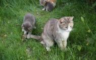 Moos'ka and her children
