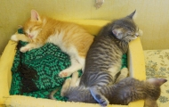Pusha kitten and her brothers