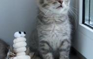 Photo session of Pusha kitten.