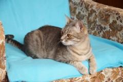 Pusha cat