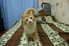 Ryzik cat