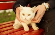 Skovorodnik cat fotosession