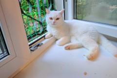 Skovorodnik cat in cat's room