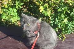 Spinka on a walk, September 2018