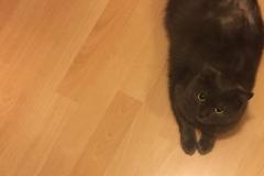 Spinka cat