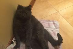 Spinka cat. December 2017.