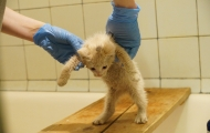 Timophey cat