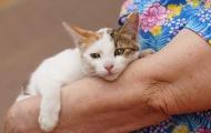 Little Rag cat