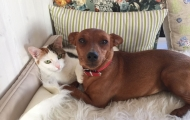Little Rag cat and small doggy