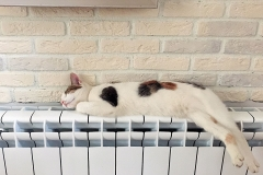 Little Rag cat's life