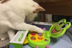 Little Rag cat is playing toys