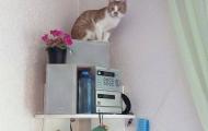 Vesnushka cat