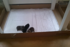 Cat and kittens arrived in Moscow