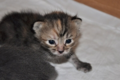 Stripy-mottled kitten in the temporary home