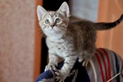 Stripy-mottled kitten in the temporary home