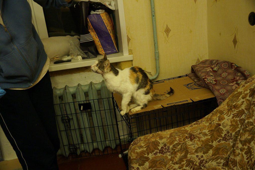 Cat with tumor