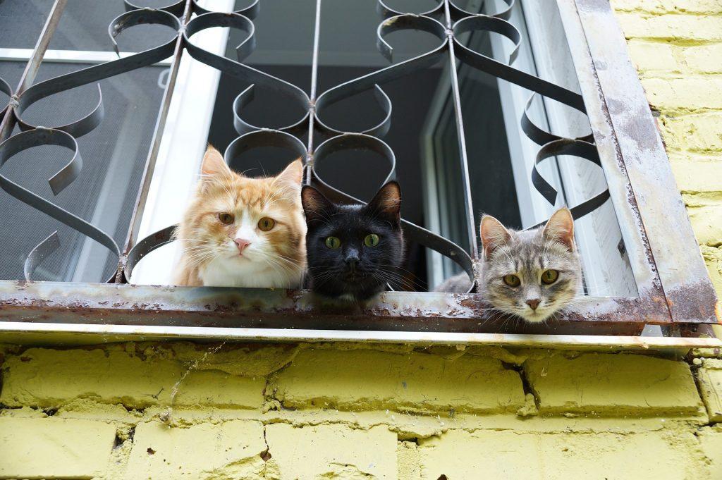 Shelter for homeless cats