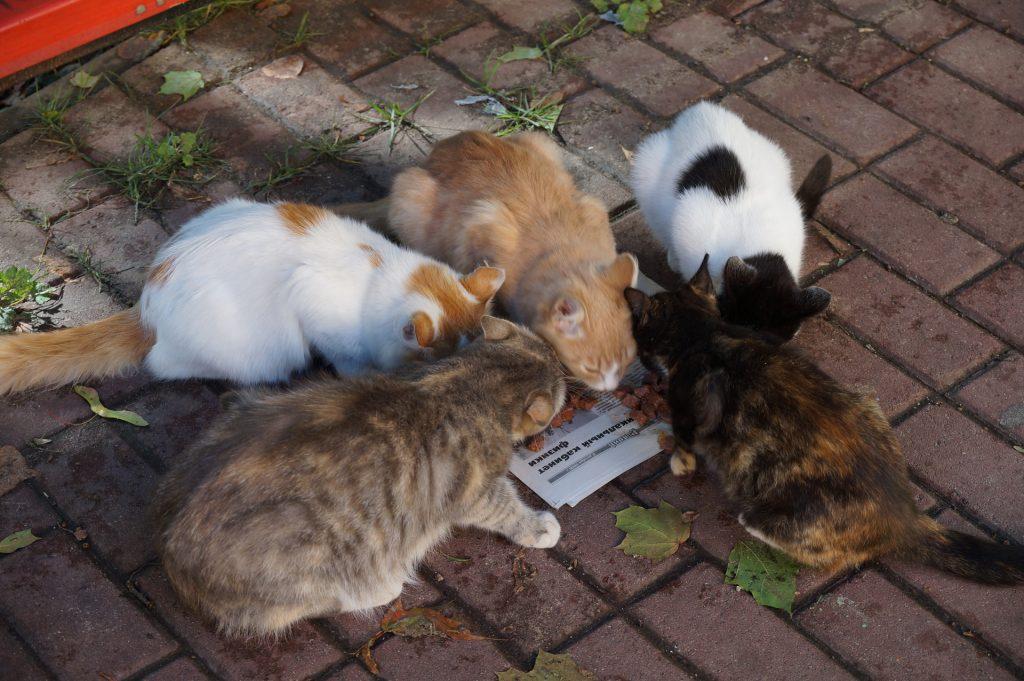 Mooska, White-Ginger, Ginger, Nose and Chernushka