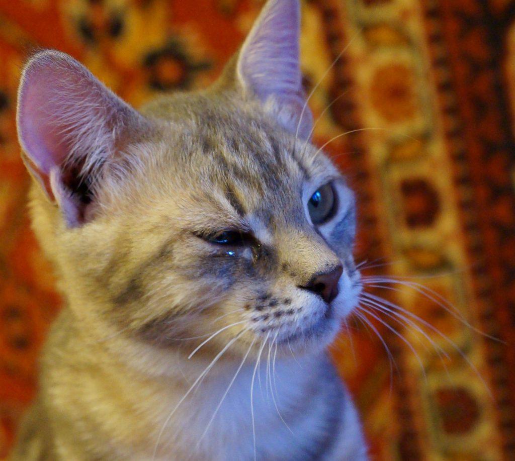 Pusha. Broken whiskers and eye discharge.