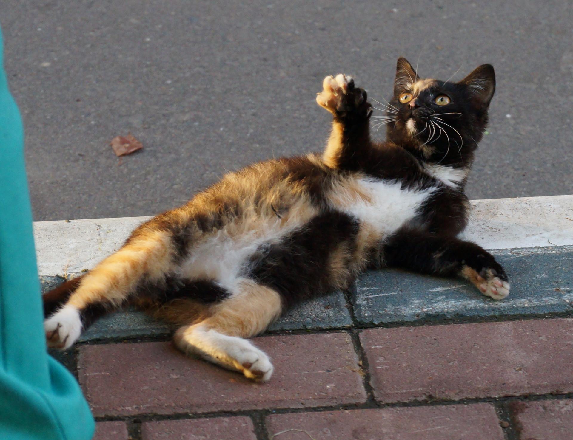 Chernushka, the cat from the box