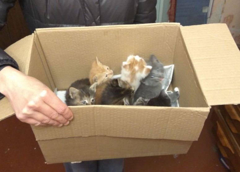 Eight kittens in the box